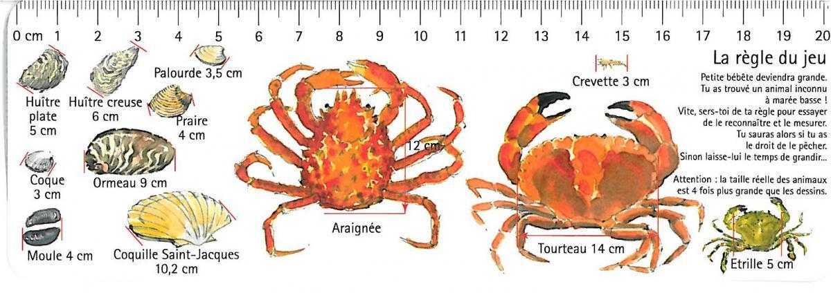 période araignée de mer